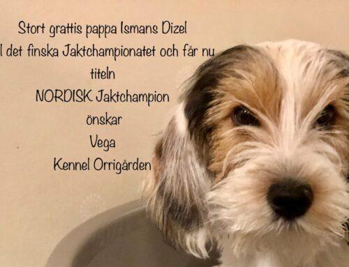 Nordisk Jaktchampion Ismans Dizel